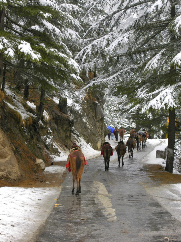 Pack horses on the road to Gangotri